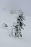 Árvore de abeto coberta com a neve no russo Lapland, Kola Peninsula Foto de Stock Royalty Free