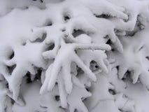 Árvore de abeto do inverno Imagem de Stock Royalty Free