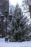 Árvore de abeto na cidade velha de Riga Fotos de Stock Royalty Free