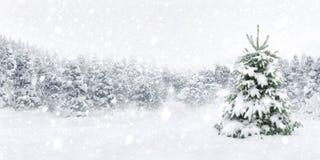 Árvore de abeto na neve grossa Imagens de Stock Royalty Free