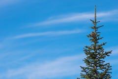 Árvore de abeto no direito, contra o céu com um espaço para o texto foto de stock
