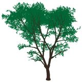Árvore de alta resolução isolada Imagem de Stock Royalty Free
