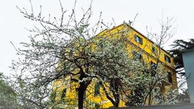 Árvore de amêndoa de Fabolous Fotos de Stock Royalty Free