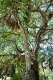 Árvore de amor de St Augustine Foto de Stock Royalty Free