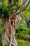 Árvore de amor, Zhonghe, Yunnan imagem de stock royalty free