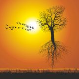 Árvore de amoreira do voo Fotografia de Stock Royalty Free