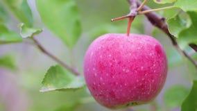 Árvore de Apple vídeos de arquivo