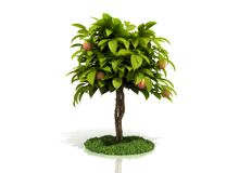 Árvore de Apple Fotos de Stock