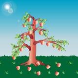 Árvore de Apple Imagem de Stock Royalty Free
