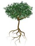 Árvore de Apple Imagem de Stock