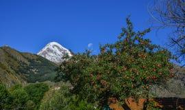 Árvore de Apple com fundo da montanha fotografia de stock royalty free