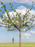 Árvore de Apple com menina running fotos de stock royalty free