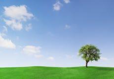 Árvore de Apple em um prado Foto de Stock