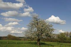 Árvore de Apple na mola, Alemanha fotos de stock