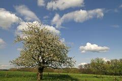 Árvore de Apple na mola, Baixa Saxónia, Alemanha foto de stock