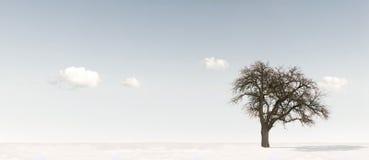Árvore de Apple no inverno imagens de stock