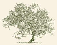 Árvore de Apple velha Fotos de Stock