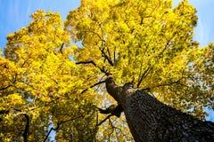 Árvore de Autunm Imagens de Stock Royalty Free
