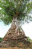 A árvore de Banyan antiga Fotografia de Stock Royalty Free