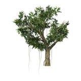 árvore de Banyan da rendição 3D no branco Fotos de Stock Royalty Free