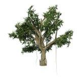 árvore de Banyan da rendição 3D no branco Imagens de Stock