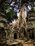 A árvore de Banyan enraíza a porta do templo da coberta Fotografia de Stock