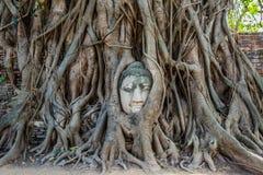 Árvore de banyan principal Wat Mahathat Ayutthaya da Buda Banguecoque Tailândia Imagem de Stock Royalty Free