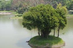 Árvore de Banyan que cresce em uma ilha no lago Foto de Stock Royalty Free