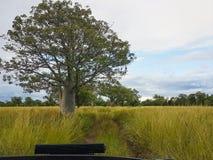 Árvore de Boab Fotografia de Stock