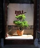 Árvore de Bonzai Imagem de Stock Royalty Free