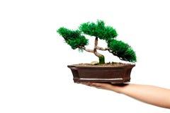 Árvore de Bonzai imagens de stock