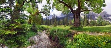 Árvore de bordo Imagem de Stock Royalty Free