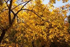 Árvore de bordo Imagens de Stock Royalty Free