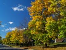 Árvore de bordo colorida Imagens de Stock