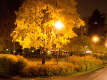 Árvore de bordo colorida na noite Foto de Stock Royalty Free