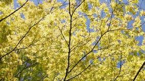 Árvore de bordo contra o céu azul video estoque