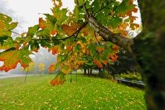Árvore de bordo da queda no parque nevoento fotografia de stock royalty free
