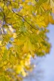 Árvore de bordo do outono Foto de Stock Royalty Free
