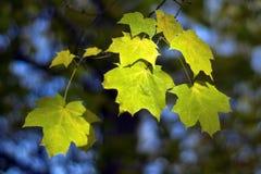 Árvore de bordo do outono Imagem de Stock Royalty Free