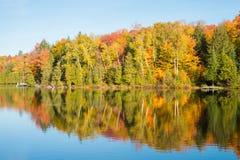 Árvore de bordo em cores do outono foto de stock