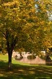 Árvore de bordo em outubro fotografia de stock