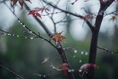 Árvore de bordo japonês fotos de stock royalty free