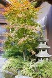 Árvore de bordo japonês com a lanterna de pedra do Pagoda Fotos de Stock