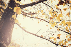Árvore de bordo na estação do outono Imagem de Stock Royalty Free