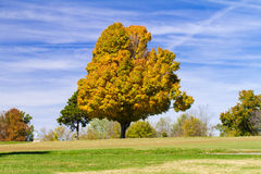 Árvore de bordo na queda Imagem de Stock