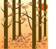 Árvore de bordo no outono Foto de Stock