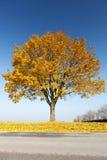 Árvore de bordo no outono Imagem de Stock Royalty Free