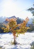 Árvore de bordo no outono atrasado imagens de stock royalty free