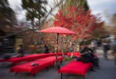 Árvore de bordo no outono japão com efeito do zumbido Imagens de Stock
