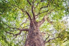 A árvore de bordo sae com os ramos coloridos Vista inferior fotos de stock royalty free